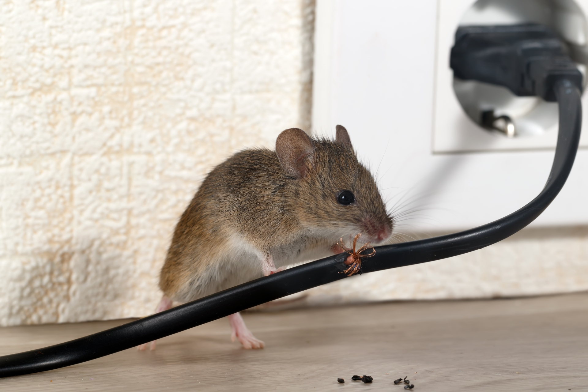 Mice Infestation, Pest Control in Purfleet, RM19. Call Now 020 8166 9746