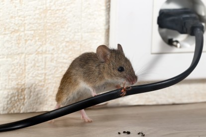 Pest Control in Purfleet, RM19. Call Now! 020 8166 9746